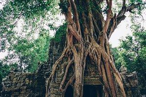 Massive Roots