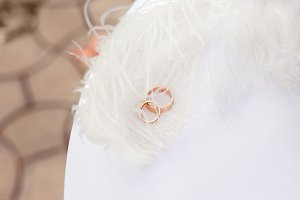 Gold wedding rings nestling in white feathers