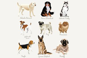 Different type of dogs set.