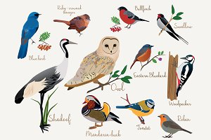 Birds illustrations set.