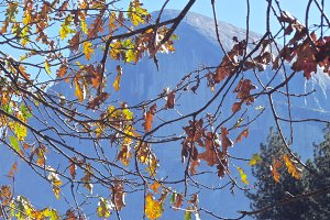 Tree Stone Mountain