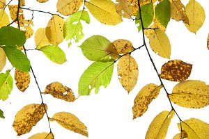 Autumn leaves isolated on the white