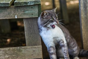 cat wild