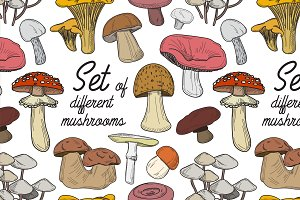 Set of different mushrooms pattern
