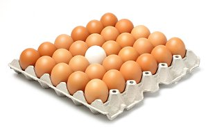 Eggs in paper tray