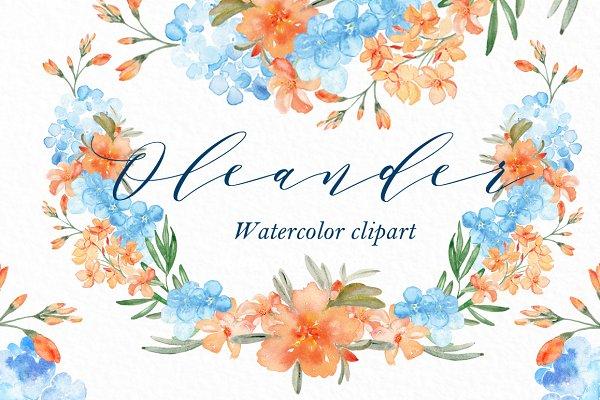 Oleander. watercolor clipart