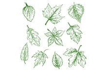 Sketched isolated green tree leaves