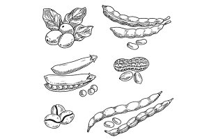 Coffee grains, pea, peanus and beans