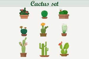 Cactus set. Exotic plant flower