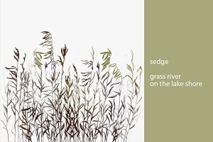 sedge. grass river on the lake shore