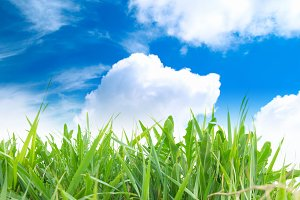 Green grass with cloudy sky