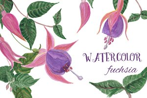 Watercolor Fuchsia PNG