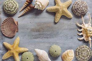 Seashells Flat Lay