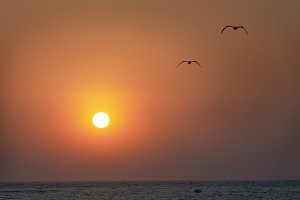 Sun and flying seagulls