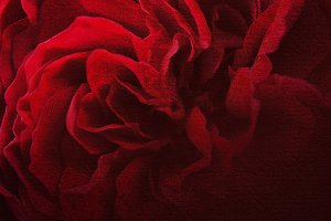 red rose petals in dark style