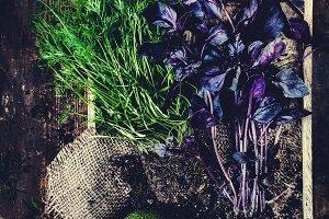Herbs and avocado