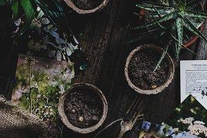 Planting flowers, still life