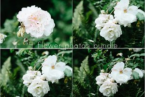 4 flower photos bundle