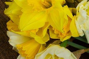 Fresh spring daffodils