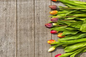 Colorful tulips with copy space