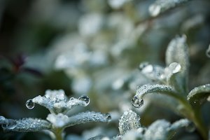 Plant with dewdrops