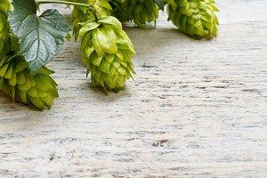 Green fresh hop