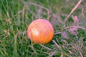 Lying alone. Rubber orange ball lying on green grass