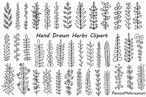 Hand Drawn Herbs Clipart