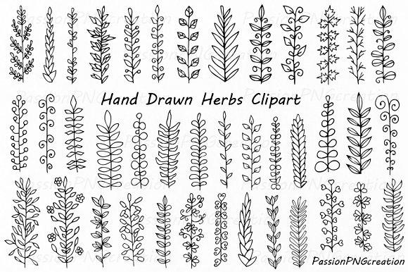 Hand Drawn Herbs Clipart