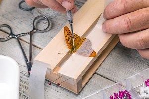 Man spreading butterfly wings