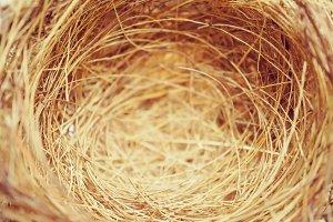 nest of bird