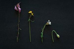 Details of plants
