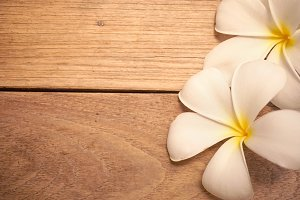 frangipani on wooden