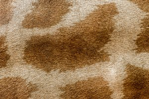 Giraffe skin hair pattern