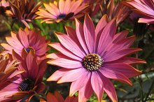 Sriking flowers