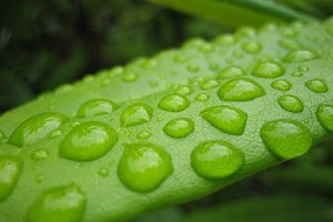 Dew droplets on leaf