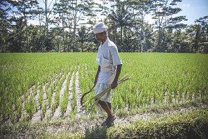 Rice Paddy Walker