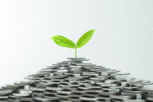 Growing plant on pile of coin money
