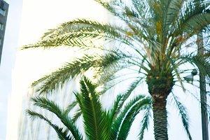 Barcelona city Palms