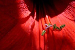 stamens with pollen