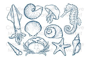 Sea shell, animals hand drawn set