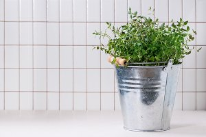 Fresh dill in metal pot