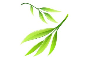 Branch with green bamboo leaves. Eps10 vector illustration isolated on white background