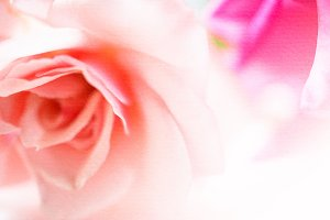 sweet pink rose petals in blur style