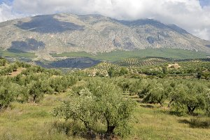 olive groves in Jaen and Sierra Magina, andalucia