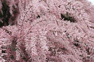 Gentle pink flowers