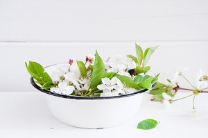 Cherry blossoms in a white bowl