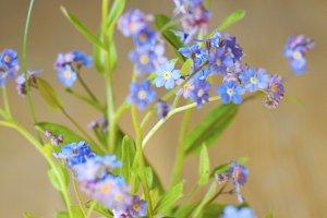 Alaska's State Flower