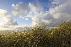 Breton Reed