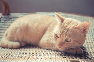 cat lying on rattan chair.